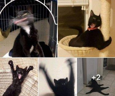 black cats being derpy