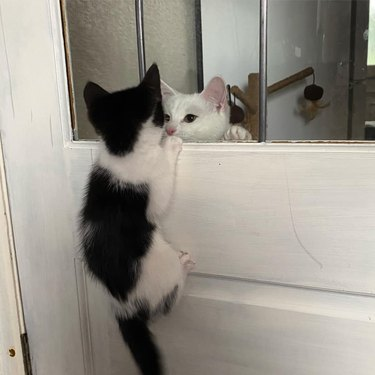 cats stare at each other through window