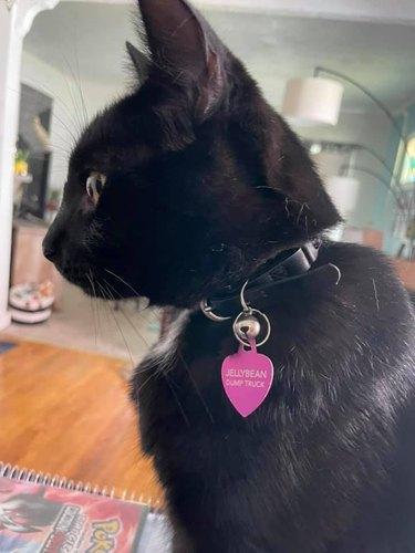 black cat named Jellybean Dump Truck