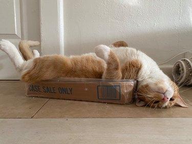 cat sleeps upside down in box