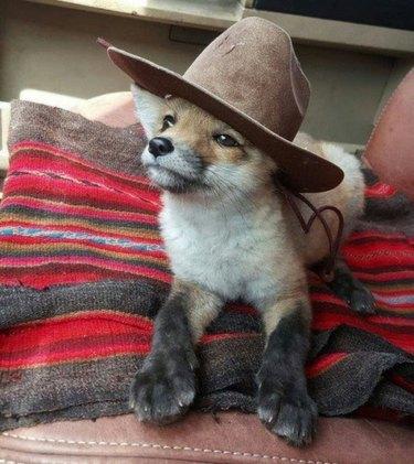 dog wears stetson hat