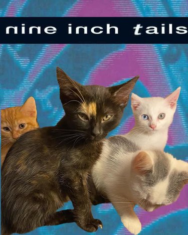 kittens photoshopped onto fake album cover