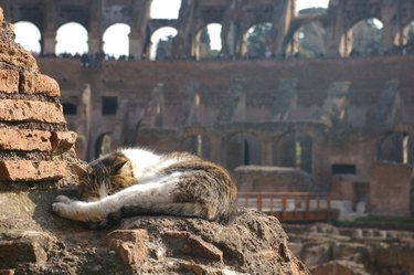 cat sleeps at Roman Coliseum