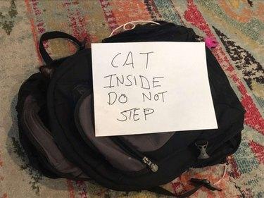 cat sleeps in backpack