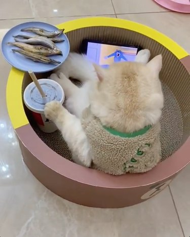 cat watches cartoons