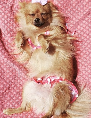 dog in pink swimsuit