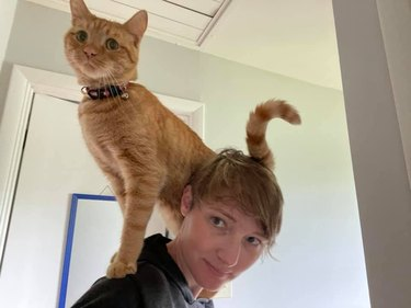cat stands on woman's shouldeer