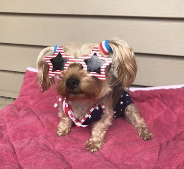 dog in July 4th outfit