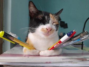 sleeping cat doubles as pen holder