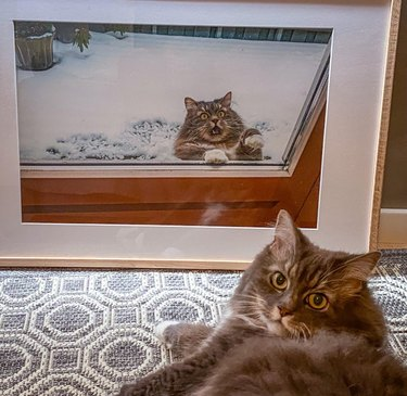 Cat sitting in front of framed picture of itself