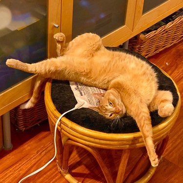 Orange cat stretched out on ottoman