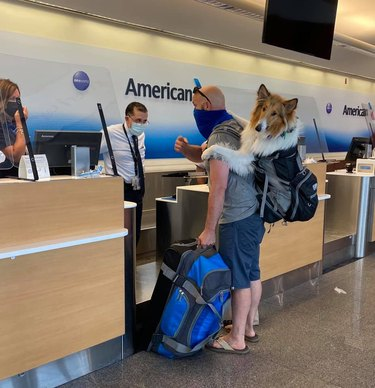 dog in backpack at airport
