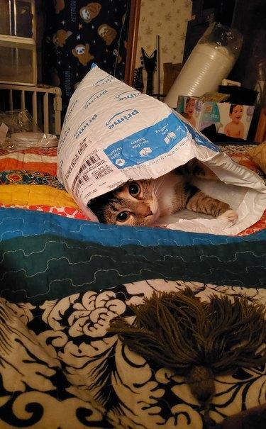 cat sleeping in Amazon prime bag
