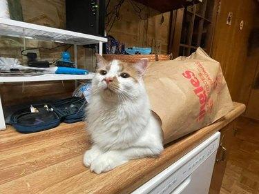 cat in paper bag looks like snail