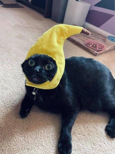 cat in banana hat