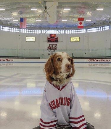 dog in umass hockey jersey