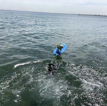 dog swimming toward dog on surfboard