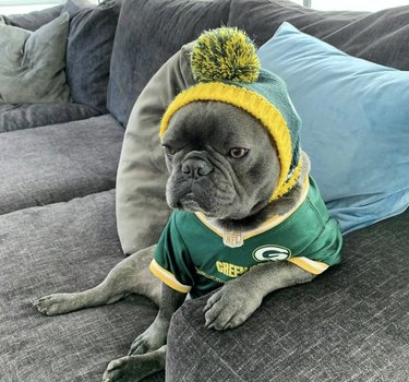 dog in packers jersey and hat