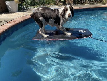 dog on surfboard in pool