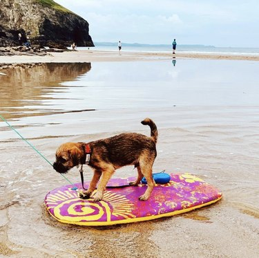 dog on boogie board