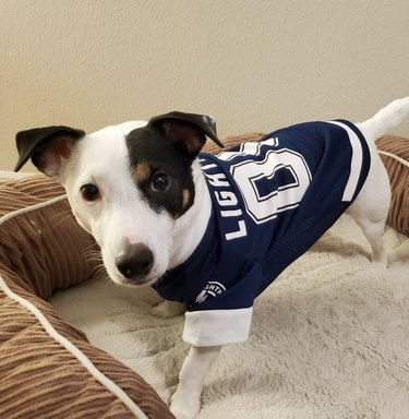 dog in Tampa bay jersey