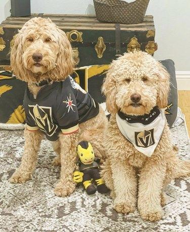 dogs in vikings jerseys