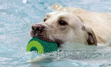 G.C 3-in-1 Fill N' Freeze Dog Chew Toy
