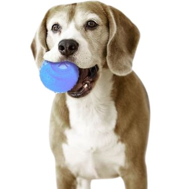 Arctic Freeze Fetch Food Cooling Teether