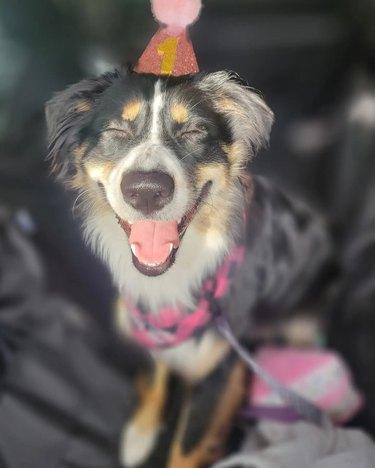 happy dog celebrates birthday
