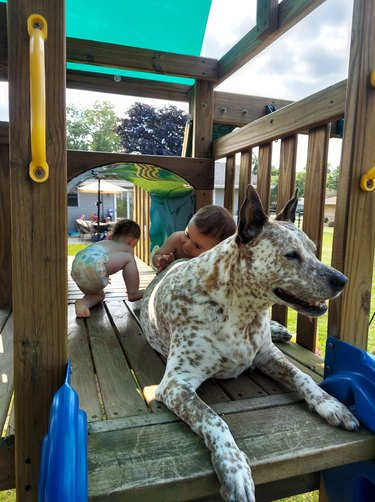 dog plays with children