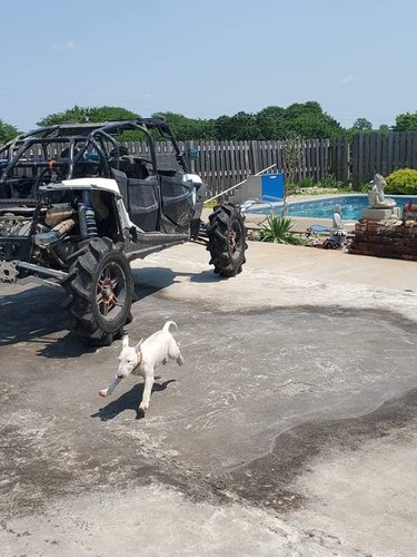 dog doing a scamper