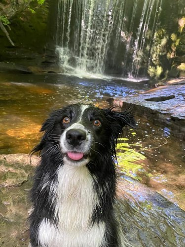 happy dog poses in front of waterfall