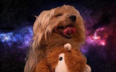 dog cuddles favorite toy