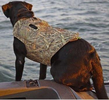 Avery Boater's Dog Parka