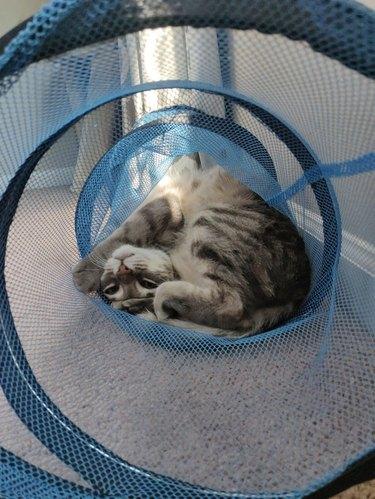 Cat bent in half inside mesh play tunnel