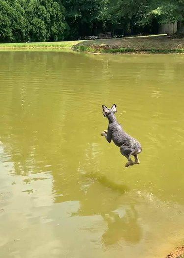 dog hovers over water