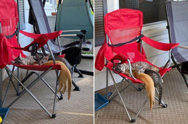 Kittens sleeping precariously on camping chair