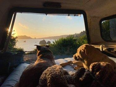 dogs watching sunset