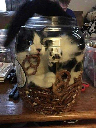 Cat squeezed into a plastic tub of pretzels
