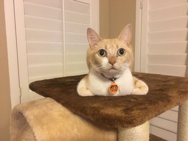 Cat sitting on cat tower with paws sticking out on either side