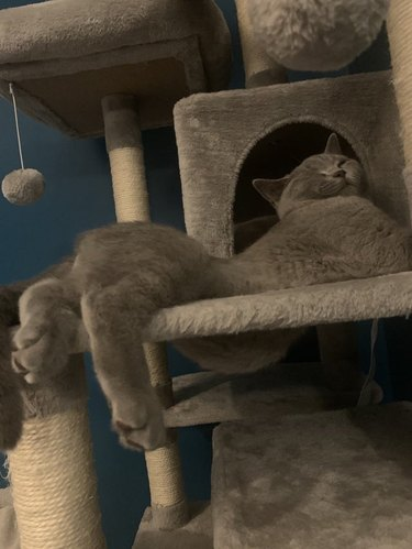 Cat sleeping on cat tower with back legs dangling off
