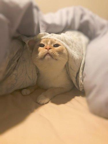 cat not happy about being awaken