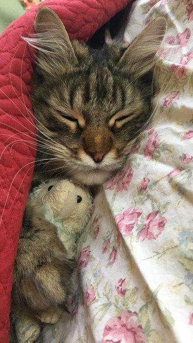 cat cuddles stuffed animal