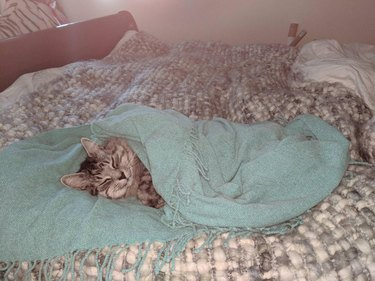 cat lying under blue blanket looking cozy