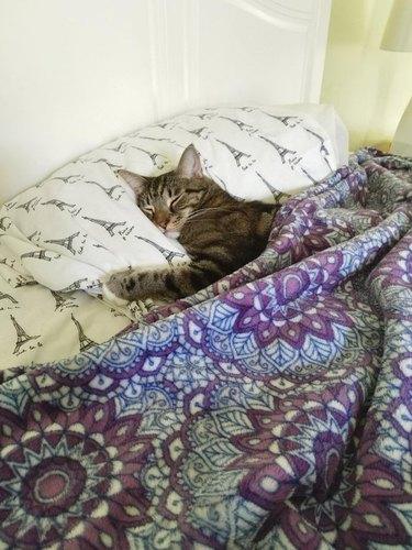 cat sleeps in human bed