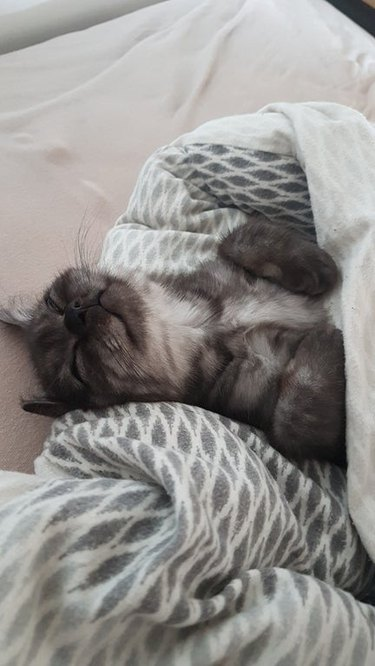 cat sleeps hard after long day