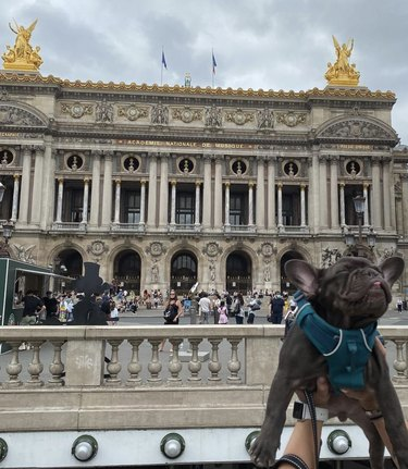 dog by opera house in Paris