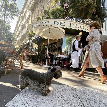 dog by cafe de flore