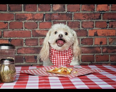 dog eating pizza at the table
