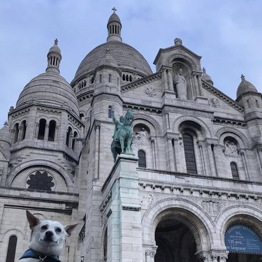 dog by sacre coeur cathedral